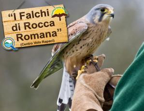 Falconiere e percorso Robin Hood