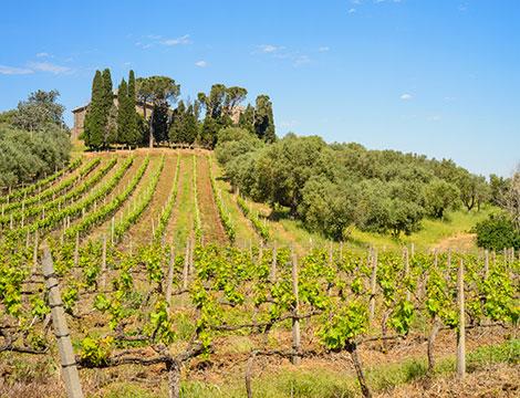 Castelli Romani visita cantina e degustazione