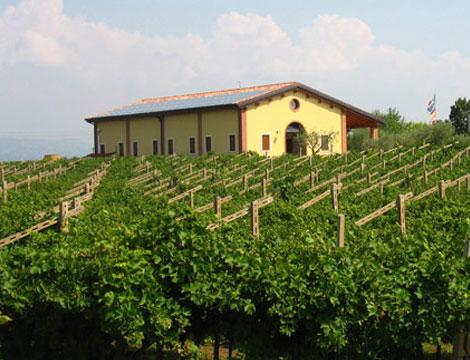 Degustazione di 4 vini accompagnati da bruschette, formaggi, dolce tipico e grappa di Bardolino