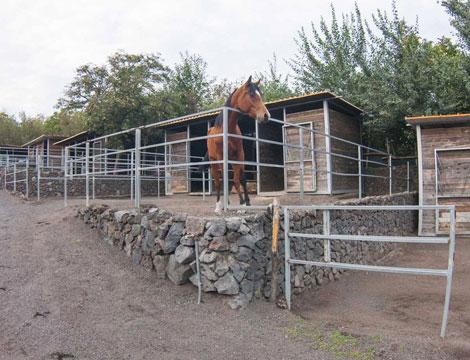 Escursione a Cavallo Parco Nazionale del Vesuvio