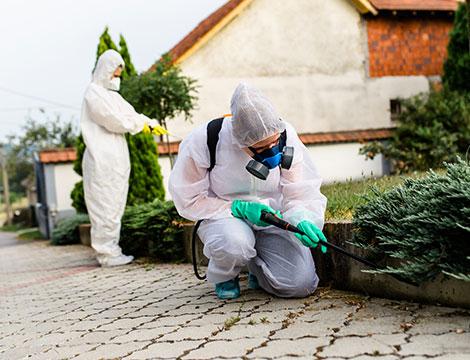 Fino a 9 ore di giardinaggio più disinfestazione da vespe e calabroni