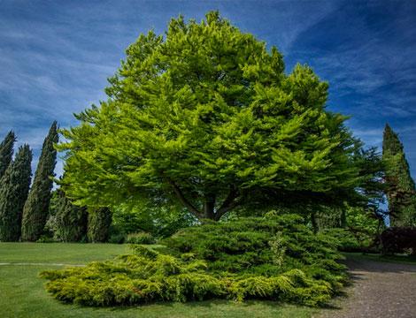 Parco Giardino Sigurta