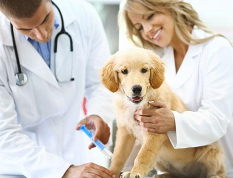 Visita veterinaria completa x1 o 2 animali