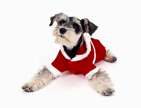 Abito da Babbo Natale per cani di piccola taglia