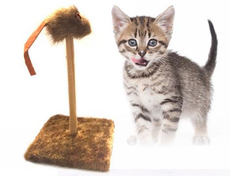 Giochi tiragraffi per gatti_N