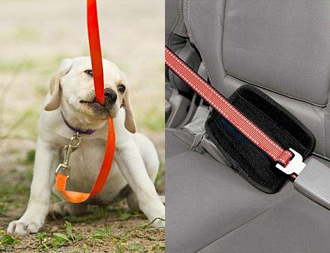 Guinzaglio e cintura di sicurezza cani_N