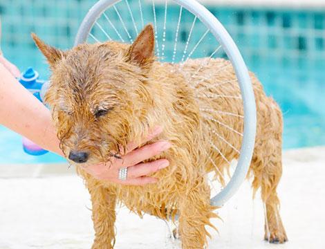 Wash dog 360
