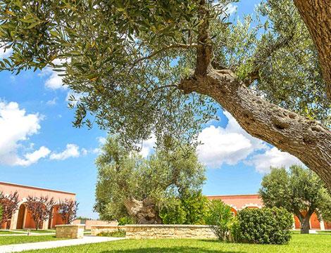 Alberobello Relais Masseria_N