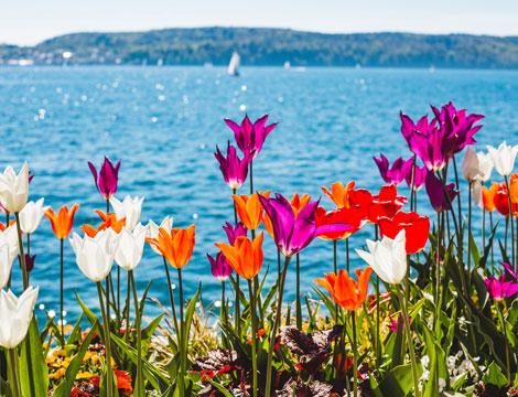 Lago di Costanza e Isola dei Fiori