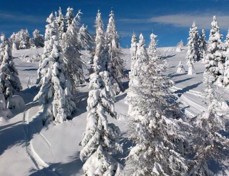 Marilleva Inverno fino 4pax_N